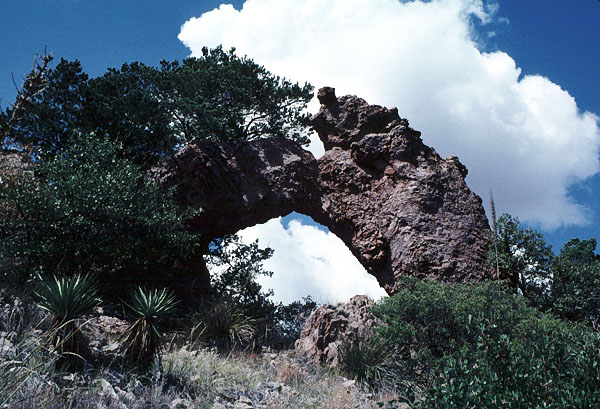 Whitetail Arch