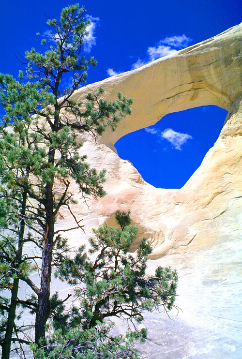 http://www.naturalarches.org/gallery_files/UTCedarWash.jpg